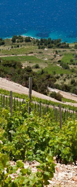 stina.vinogradi.niz